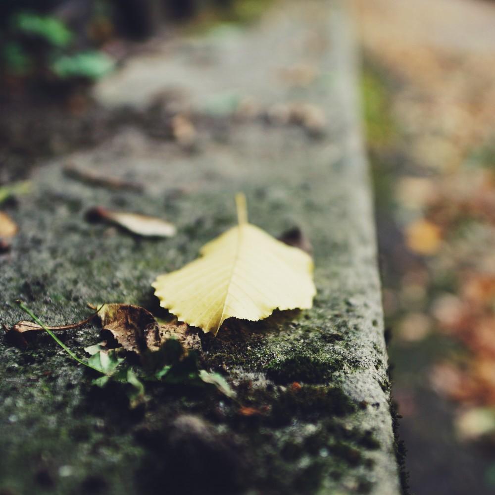 Autumn by Nazar